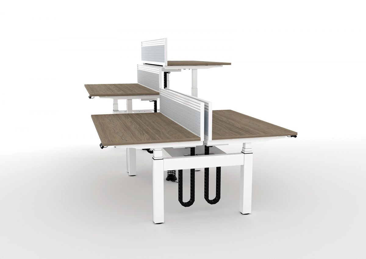 height adjustable, sit stand, back-to-back desk, double bench, white frame, oak desk, dividing screen, cable management, slinky, spine,